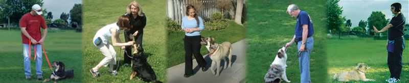 John Cone, Dog Training in Tampa Bay, Florida Seffner FL